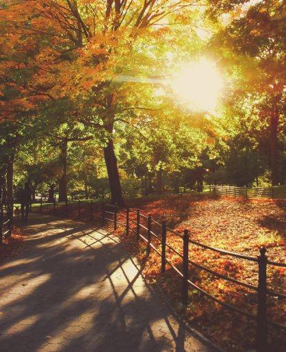 New York Autumn - Central Park - Sunset